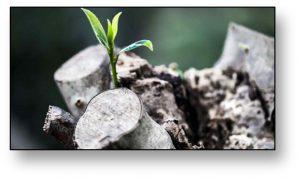 Acellus AP Environmental Science